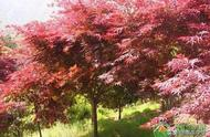 秋分是什么意思?秋分节气有哪些习俗和诗句?