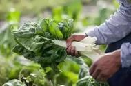 农业创业大有作为,怎样经营农业?