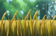 观刈麦中描写农民辛苦劳作的句子