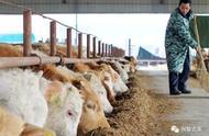 养殖业什么最赚钱农村 这些养殖创业项目不愁销路