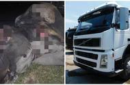 卡车撞死大象!保险杠撞碎3吨重母象当场死亡,司机竟毫发无伤