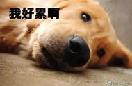 形容人很劳累累得像狗一样的词语有哪些