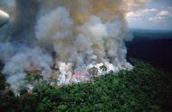 亚马孙森林大火已烧16天 巴西总统:这是犯罪