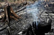 亚马逊森林大火已持续燃烧16天