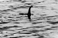 科学家搜集DNA样本发现:尼斯湖水怪可能是巨型鳗鱼