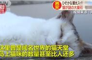 谁干的!日本猫岛遭人恶意投放毒鱼,致70只猫咪死亡