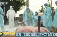 越南非洲猪瘟疫情不断蔓延 已被扑杀生猪超过400万头