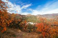 蜂鸟今日谈 | 今日秋分,你看过秋天景色最美的地方是哪里?