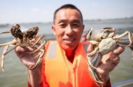 阳澄湖大闸蟹正式开捕,113平方公里水域预计总产量1400吨