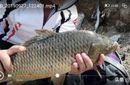 学习钓技钓法,少走弯路,这篇文章百分之八十钓鱼人赞同