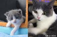 """中国首只克隆猫""""大蒜""""诞生,你最爱的主子原地满血复活"""