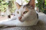 读懂猫咪的肢体语言,才能听懂喵星人说爱你啊