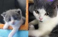 """中国首只克隆猫诞生,它会像克隆羊""""多莉""""一样短命吗?"""