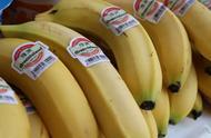 2050年香蕉或将完全消失?英国研究表明:由于全球变暖