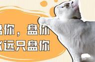 如果猫咪有这3个表现,说明你对它是最特别的存在!