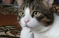 """其实猫咪""""听懂""""人话哦,所以千万不要对它们说坏话"""