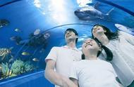 青岛海底世界:十六年前开业的人造景点还值不值得去?