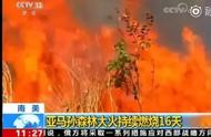 """亚马孙森林大火已持续燃烧16天,""""地球之肺""""急需拯救"""