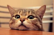 你不相信?猫咪当然能听懂人类的语言,惊不惊喜