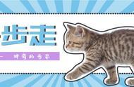 优雅或沙雕,猫咪的5种基本步态你都见过吗?