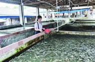 100平方猪栏养8万斤鱼,8.5元/斤!转养鱼,不乏原400头母猪大户
