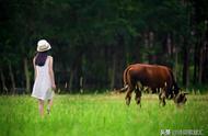 """与""""牛吃草""""有关的诗句有那些"""