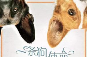 《一条狗的使命》被传虐狗,被悬赏5k美金抵制,结局意外反转!