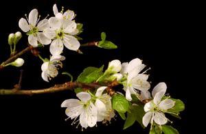 大班散文诗《花开的声音》内容是什么啊?