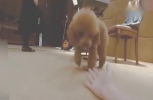 王俊凯调侃王源的宠物狗嘟嘟,我第一次见到这么蠢的狗!贼逗的!