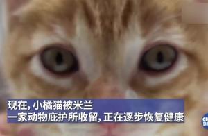弱小又可怜的中国小橘猫被误关集装箱运到米兰,善待小动物...