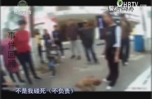 出租车司机将小狗撞死,却对责任完全推卸给狗主人,据不负责