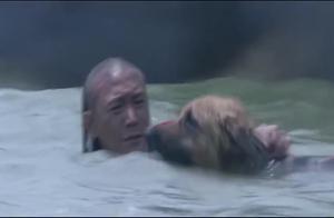 爱犬不顾炮击威胁,舍命拯救主人性命,这段让人眼角湿润