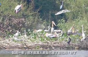 世界最大的垃圾场,鸟长得比人大,为何当地人宁愿吃垃圾也不吃鸟