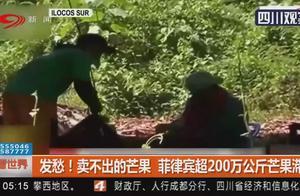 发愁!卖不出的芒果 菲律宾超200万公斤芒果滞销