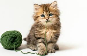陪猫咪玩耍也有学问?一些小方法教你更好的和猫咪互动