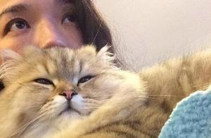 舒淇养的价值好几万一条的金吉拉猫,样子实在太萌