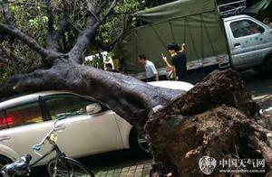 雷雨大风袭广州,吹倒大树?#19968;?#23567;车