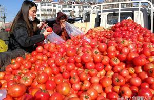 摊贩贩来新疆普罗旺斯西红柿 5块钱3斤 好吃又便宜 大集上遭抢购