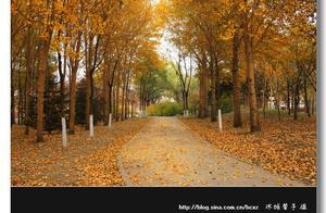 走在太阳岛的金色秋天