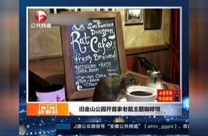 宠物圈新贵?旧金山公园开首家老鼠主题咖啡馆