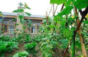 这3个方法,让农民的菜地即使不用农药,也能少长甚至不长杂草