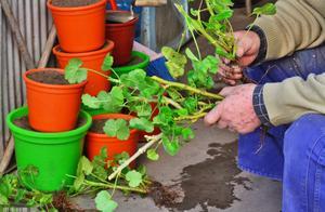 这种过期药可是养花宝,既能养好花还能延长插花花期,扔了太浪费