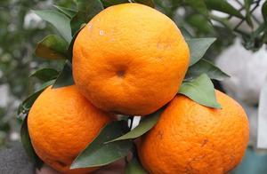 柑橘放着总是腐烂,这是病,得治!