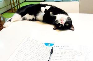 """孩子成绩老不好,多半其中有""""猫腻"""",硬核妈妈派猫咪陪读学习!"""