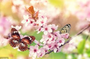 关于春天的散文或小说