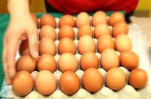 5月31日鸡蛋考价格