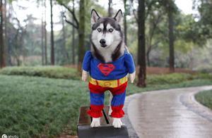 狗狗伤人事件频繁,养狗人士应当提升素质负起责任