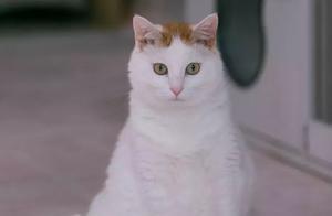 猫猫后腿全部瘫痪,但依然乐观活得像个正常猫