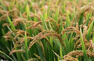 服务在田间地头的企业,希望金融成功助力数万个农村家庭