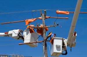 造成大规模停电的元凶有时候不是自然灾害,而是毛茸茸的它
